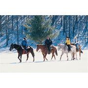 Зимние конные прогулки фото