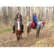 Прокат лошадей, прогулки на лошадях в Харькове, урок верховой езды. фото