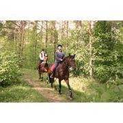 Услуги конно-спортивные в ЗакарпатьеКарпатахУкраине фото