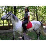 Катание на лошадях прогулки на лошадях г. Харьков фото