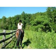 Катание на лошадях фото