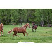 Услуги конно-спортивные прокат лошадей тренировки конкурного направления конный клуб фото
