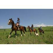 Верховые прогулки в поля, леса, в летнее время купание на лошадях фото
