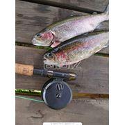 Организация любительськой рыболовли. Рыбалка фото