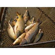Любительская рыболовля Райгородское водохранилище Луганская область фото