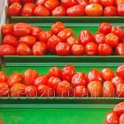Овощи свежие экспорт фото