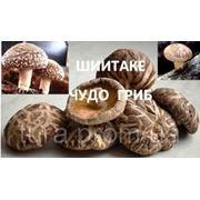 Грибы Шиитаке дома, готовый блок! От 5 кг грибов! купить фото