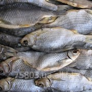 Рыба вяленая в ассортименте. фото