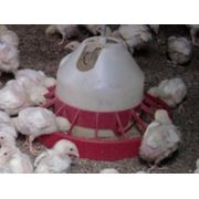 Комбикорм для цыплят-бройлеров фото