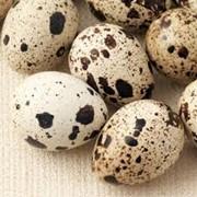Перепелиные яйца фото
