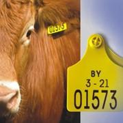 Бирки мечения сельскохозяйственных животных фото