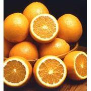 Апельсины продажа опт Украина фото