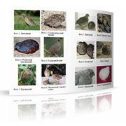 Книги и справочные материалы по птицеводству от учёных Института птицеводства НААН Украины фото