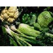 Семена зеленых овощей в Украине Купить Цена Фото  семена почтой фото