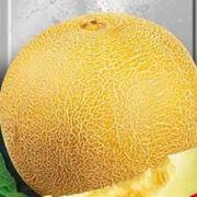 Семена дыни в Украине Купить Цена Фото дыни семена дыня таманская дыня хандаляка дыня медовая фото