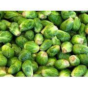 Семена капусты брюссельской в Украине Купить Цена Фото Семена брюссельской капусты семена капуста Брюссельская фото