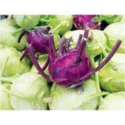 Семена капусты кольраби в Украине Купить Цена Фото фото