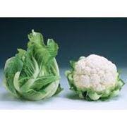 Семена капусты цветной в Украине Купить Цена Фото фото