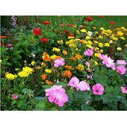 Пакетированные семена цветов. фото