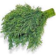 Семена укропа в Украине Купить Цена Фото укропа семена укроп семена фото