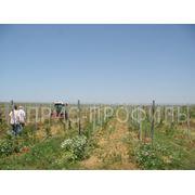 Купить виноградные столбики по выгодным ценам в Украине (Харьков Симферополь Одесса Ялта Алушта) фото