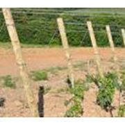 Колышки для садов и виноградников фото