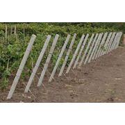 Бамбуковые опоры (D= 24/26мм; толщина стенки – от 5 мм; длина – 295 см) для сада и виноградников. фото