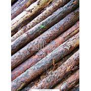 Столбы сосна ель Шпалерные столбы Оборудование для садоводства и виноградарства купить  Украина цена доступная. фото