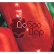 Семена перца сладкого в Украине Купить Цена Фото Перец сладкий семена фото