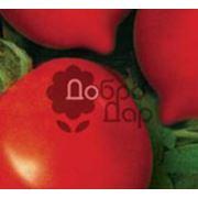 Семена томатов в Украине Купить Цена Фото томаты семена помидоры семена фото