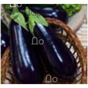 Семена баклажан в Украине Купить Цена Фото баклажаны семена семена баклажанов фото
