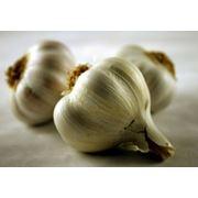 чеснок посевной (воздушные луковицы) фото