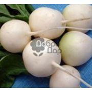Семена редиса в Украине Купить Цена Фото семена редьки дайкон семена редис семена фото