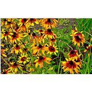 Цветы многолетние садовые фото