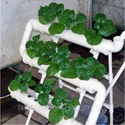Гидропоника.Гидропонный полив.Быстрый рост растений. фото