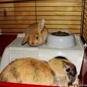 Приют для кроликов фото