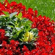 Устройство цветников и клумб №45 фото