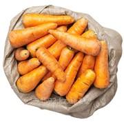 Морковь фото