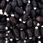 Jatropha Seeds, Castor Seeds, Mustard Seeds, Pumpkin Seeds фото