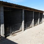 Специализированная гостиница для собак АЛМАС фото