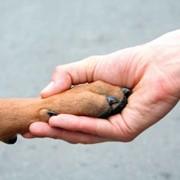 Программа страхования животных Моё Подворье фото