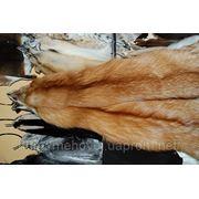 Финская лиса (огневка) фото