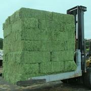 Продам сено люцерны и луговых трав в тюках фото