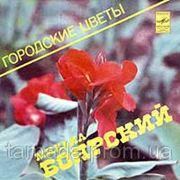 Боярский Михаил - Городские цветы (караоке) фото