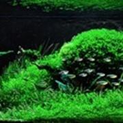 Обслуживание аквариумов Киев, Киевская область фото