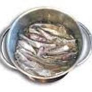 Консервы рыбные натуральные фото