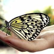 Живые тропические бабочки фото