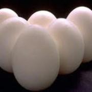 Сертификация, контроль качества продуктов питания: мясо куриное, яйца фото