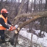 Удаление аварийных деревьев город Киров. фото