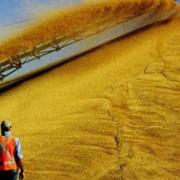 Экспорт зернопродуктов фото